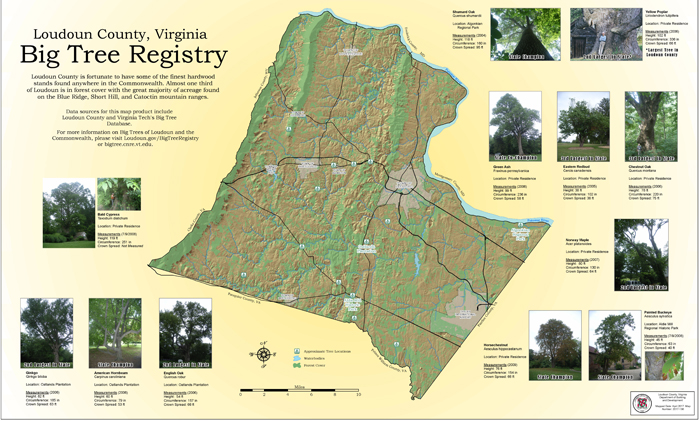 Big Tree Registry