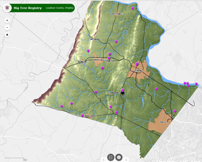 Big Tree Registry Map